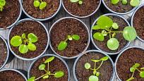 Množení rostlin není nijak složité.