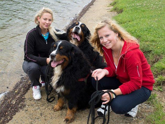 Bernský salašnický pes není zrovna milovníkem vody