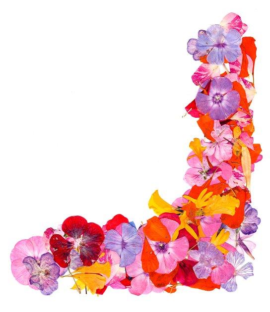 Suché lisované květy poslouží k výrobě obrazu.