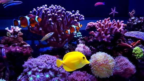 Mořské akvárium nabízí úžasné množství pozoruhodných barev i tvarů.