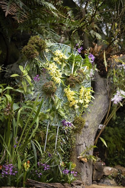 Výstava orchidejí ve skleníku Fata morgana