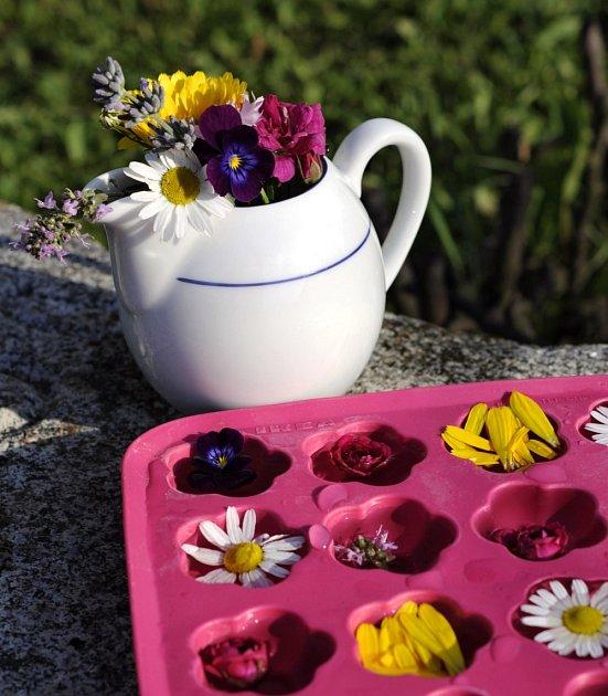 jedlé květy pro ledové kostky