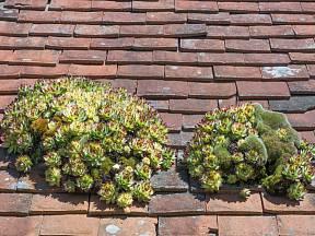 Netřesk na střeše