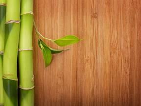 Z bambusu se vyrábí podlahové krytiny