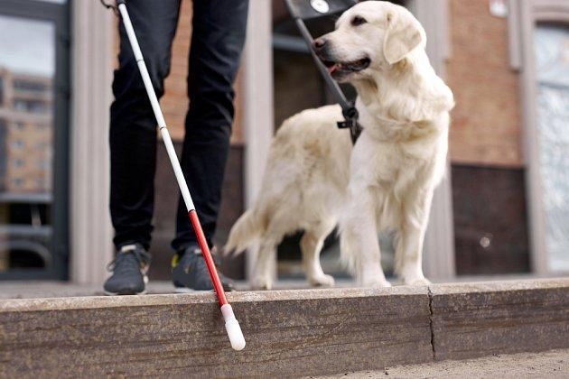 Také nebezpečí hrozící na silnici mohou psi s jistotou odhalit.
