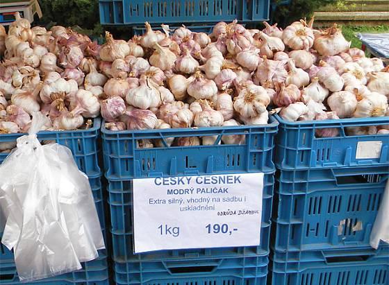 Španělský česnek vydávaný za českou odrůdu Džambul