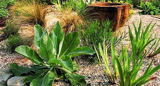 štěrková zahrada