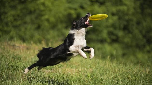 Dogfresbee