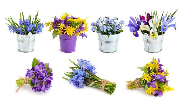 Jarní kvítí má svou neopakovatelnou krásu.
