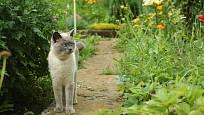 jak vypudit kočku ze zahrady