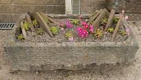 Levisie (Lewisia) můžeme v korytech pěstovat také, ale patří k náročnějším skalničkám.