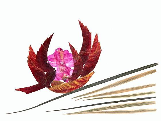 Z vylisovaných okvětních plátků a listů můžeme vytvářet různé vzory.