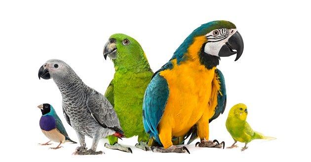 Které druhy papoušků se nejsnáze učí mluvit?