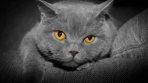 Kočka dokáže uzdravovat lidské tělo i duši při felinoterapii.
