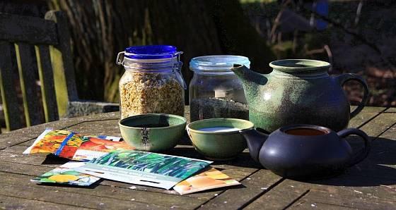 Semena můžete máčet před výsevem na záhony i do sadbovače pro předpěstování sazenic