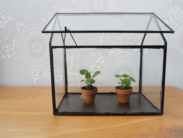 Před vysycháním ochrání mladé rostliny malý skleníček či igelitový sáček.