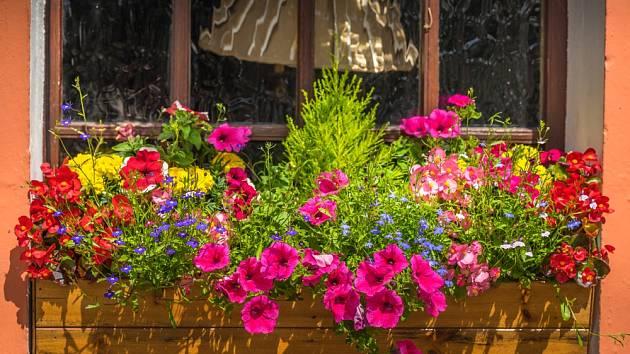Ten správný čas na osazení truhlíků a květináčů, které rozzáří vaše balkony a zahrady, je konečně tady