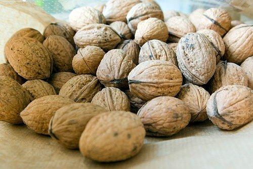 Zdravý ořešák v plném růstu dokáže za rok vyplodit až 50 kg jedlých vlašských ořechů.