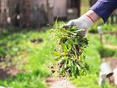 V současné době je v na českém území něco kolem 200 možných druhů plevelů.
