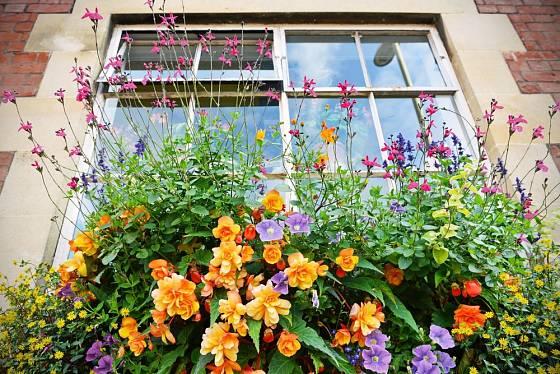 Pestrá výsadba okenního truhlíku rozzáří celý dům.