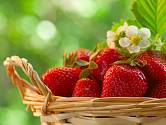 Čerstvé jahody jsou skvělá pochoutka.