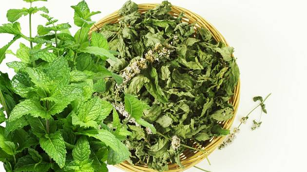 Máta - čerstvé i sušené listy