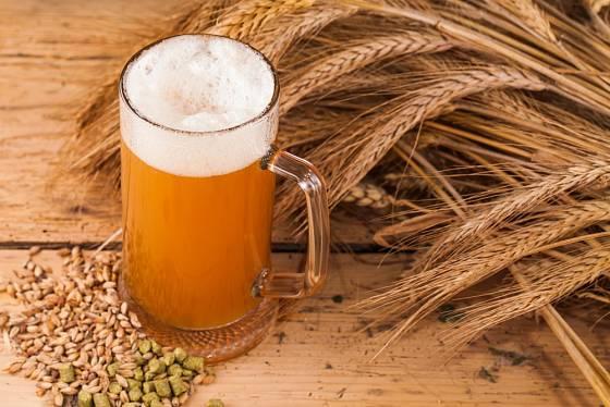 Pivo si můžeme uvařit i v domácích podmínkách.