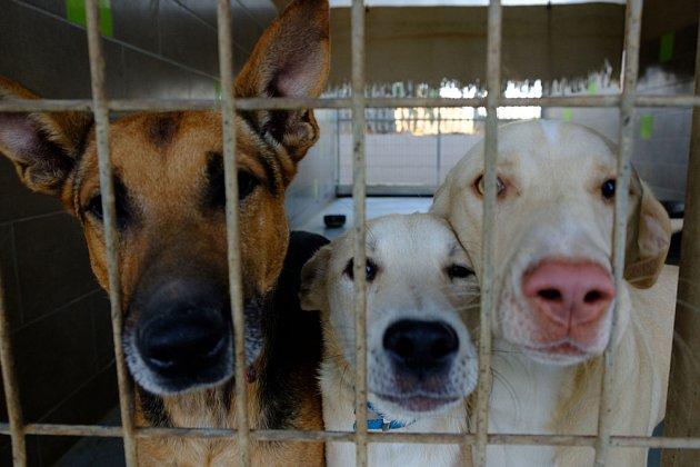 Větší šanci na adopci mají vždy štěňata anebo menší psi.