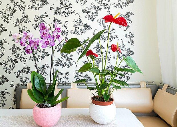 Toulitce i orchidejím se daří u východního okna