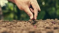 Při letních výsevech nesmíme nechat klíčící semena zaschnout