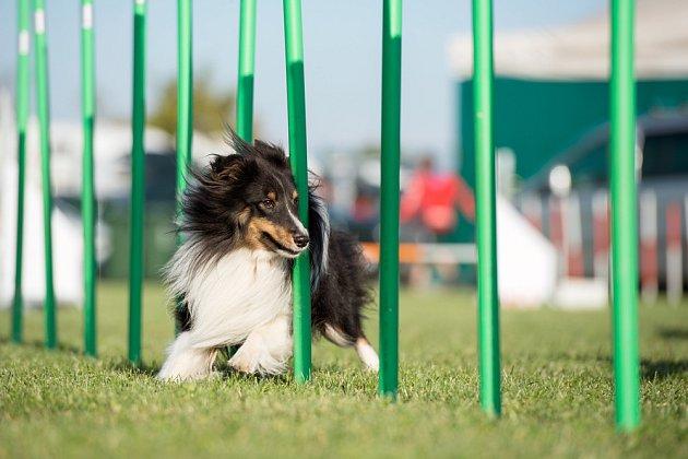 Agility je sport, který milují psi i jejich lidé.