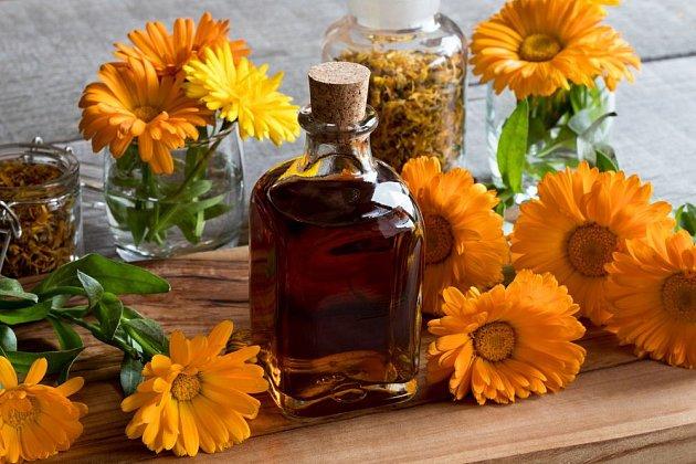 Hojivý olej připravíme macerací květů, nejlépe v zastudena lisovaném rostlinném oleji
