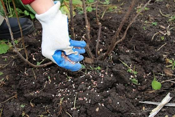 Minerály jsou ve výživě ovocných dřevin velmi důležité