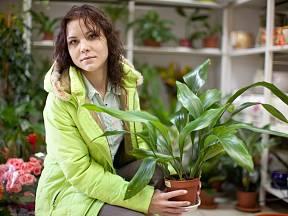 Kořenokvětky bývají drahé, ale vydrží vám dlouhá léta