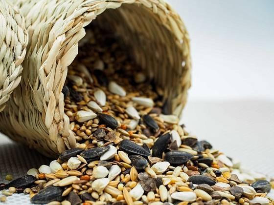 Proso bývá oblíbenou součástí krmných směsí pro ptáky.