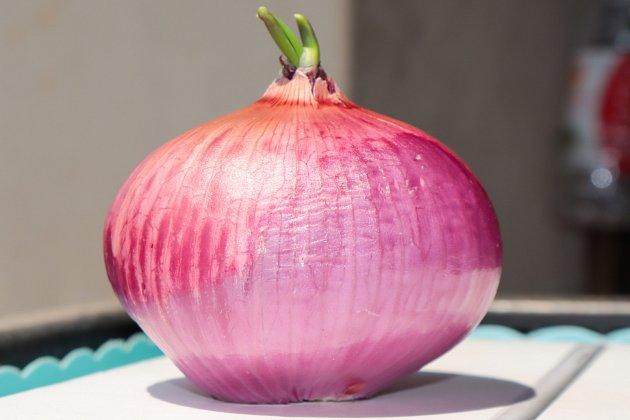 Předpokládá se, že původem pochází tato rostlina ze střední Asie, a to z planě rostoucího druhu Allium oschaninii.