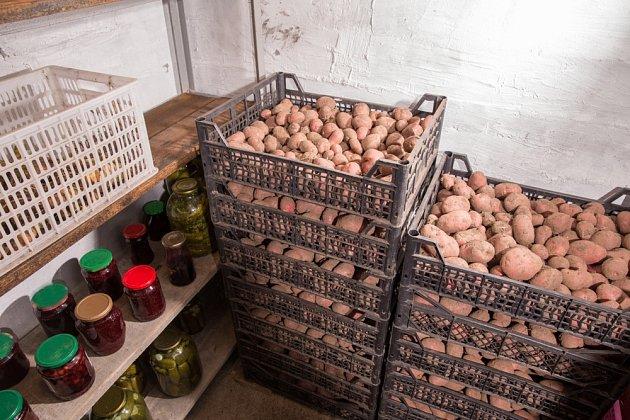 Uskladněná brambor ve sklepě.