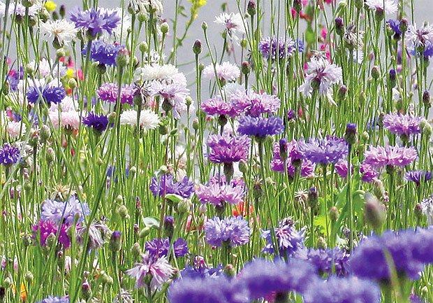 Záplava květů všech barev, tvarů a vůní