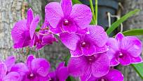 Letnění svědčí i orchidejím, nejlépe ve stínu stromů