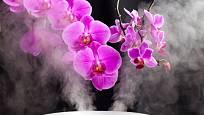 Dostatek vláhy ve vzduchu milují i orchideje