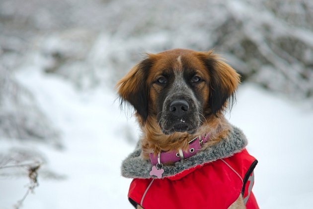 Obleček do sněhu se může na zimu hodit.