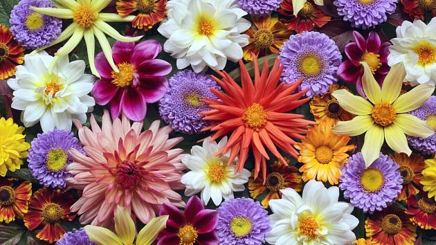 I podzimní zahrada může být plná pestrých květů.