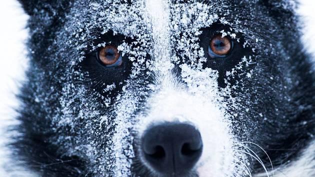 """""""Karelák"""" rozhodně není bytový pes, vbytě by opravdu trpěl, zahrada je pro něj jediná možnost"""