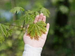 Stromy do malých zahrad jsou především okrasné, mohou plnit ale i jiné funkce.