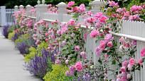 Nižší plot s průhledem do okolí také dokáže zahradu opticky zvětšit.