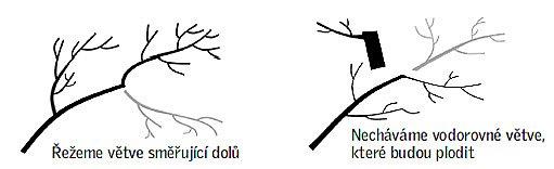 řez větví