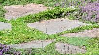 Kvetoucí dlažba, atraktivní prvek zahrady