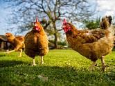 Na pořádné jaro se netěšíme jen my, ale také naše domácí a hospodářská zvířata