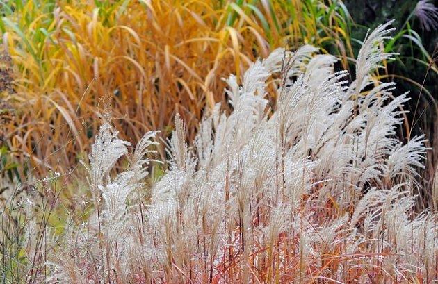 Stébla, listy a květenství trav zdobí zahradu, i když na podzim uschnou