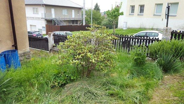 Stanoviště chřadnoucího rododendronu je málo chráněné.